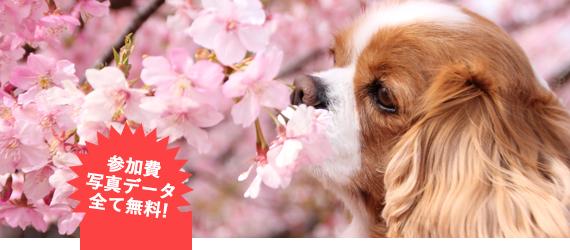ダリアと一緒に愛犬撮影会【おでか犬】
