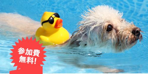 わんわんプール【おでか犬】