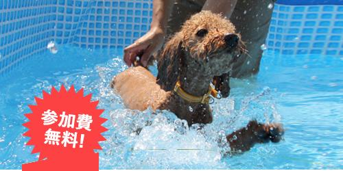 愛犬水泳教室【おでか犬】