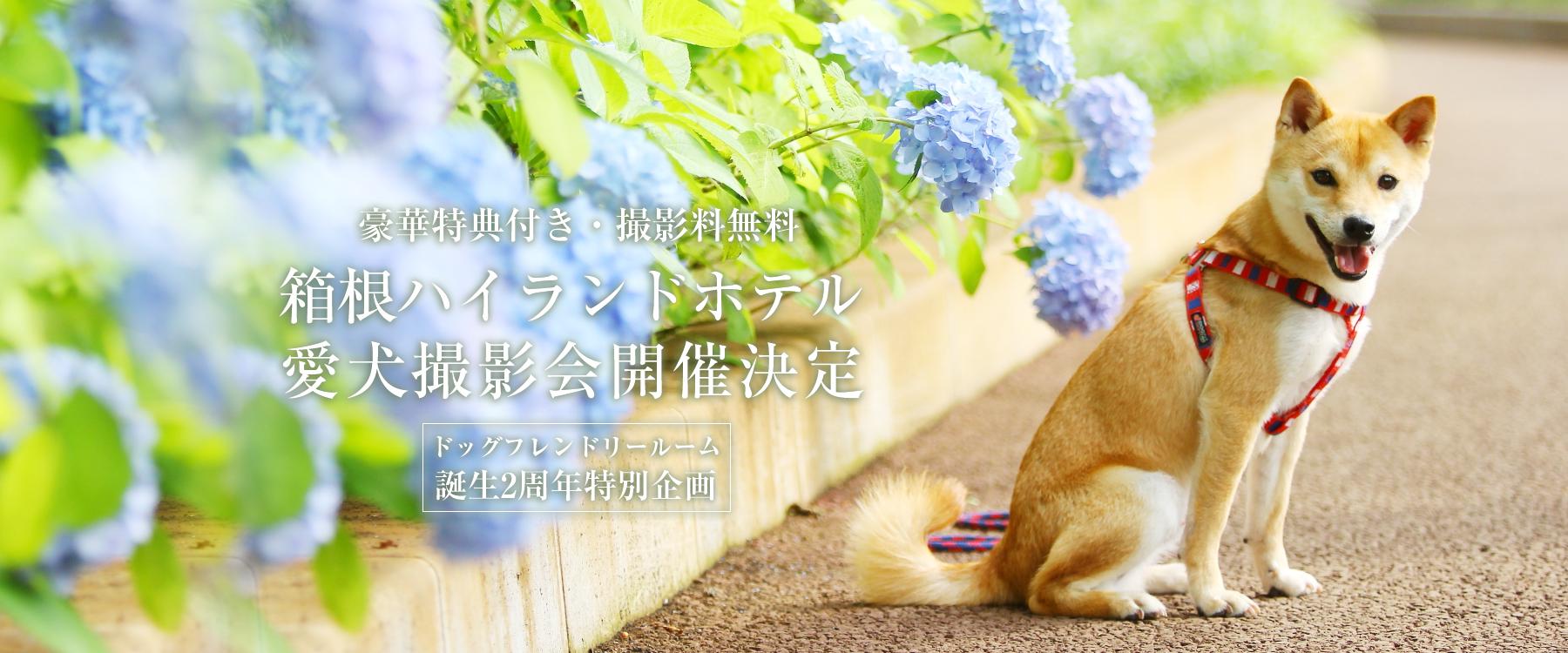 箱根ハイランドホテル愛犬撮影会