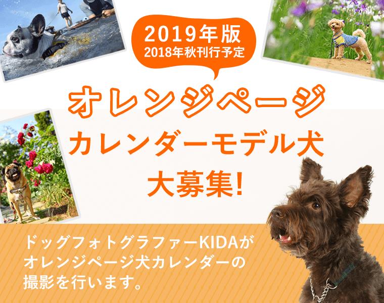 オレンジページのカレンダーに登場してくれる「愛犬」を募集中!