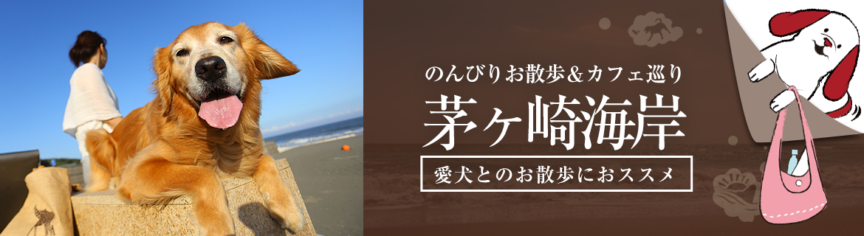 茅ヶ崎海岸でのんびりお散歩&カフェ巡り【おでか犬】