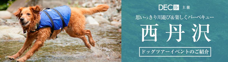 西丹沢|思いっきり川遊び&楽しくバーベキュー|おでか犬