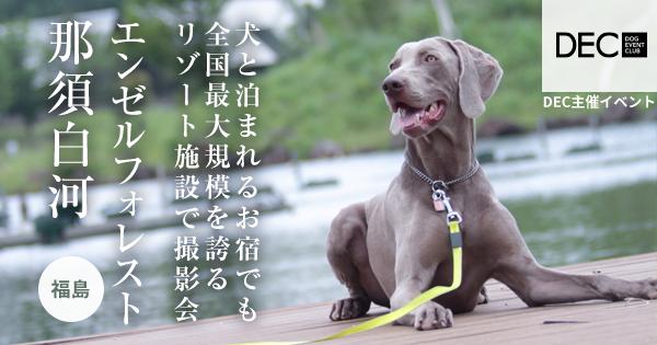 羽鳥湖高原レジーナの森【おでか犬】