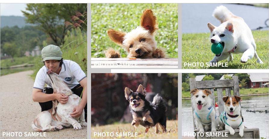 羽鳥湖高原レジーナの森|愛犬撮影会フォトサンプル|おでか犬
