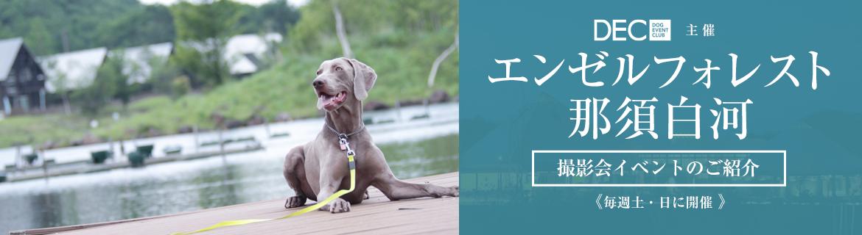 エンゼルフォレスト那須白河|お宿で撮影会|おでか犬