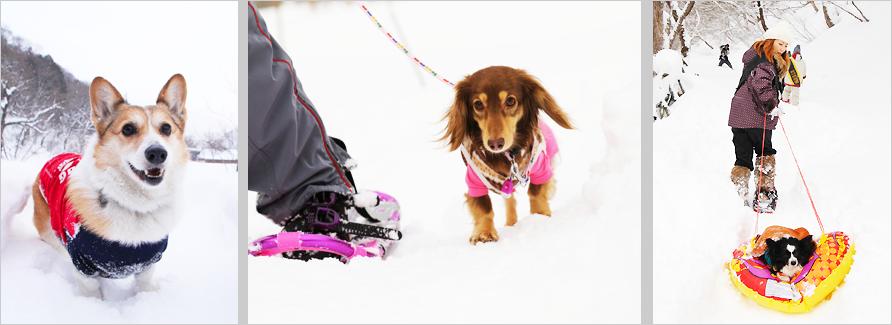 愛犬と遊ぶスノートレッキング in 群馬みなかみ【おでか犬】