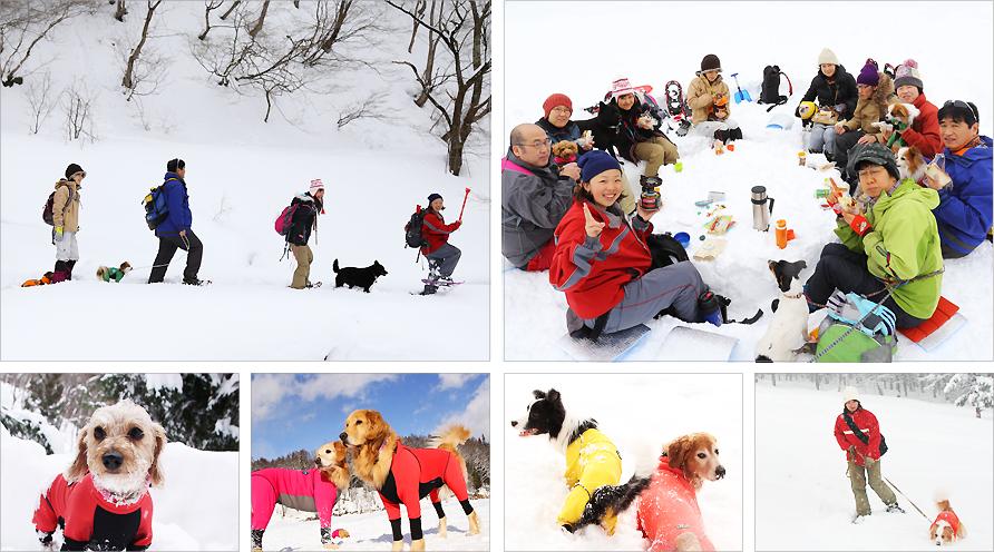 愛犬と遊ぶスノートレッキング