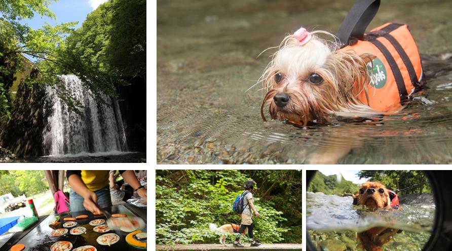 西丹沢での水遊び&バーベキューの様子【おでか犬】