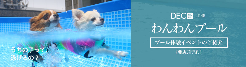 わんわんプール|プール体験イベント
