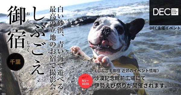 しぶごえ千倉 お宿で撮影会|DOG PHOTO