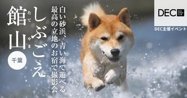 しぶごえ館山 お宿で撮影会|DOG PHOTO
