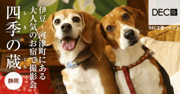 ホテル四季の蔵 お宿で撮影会|DOG PHOTO
