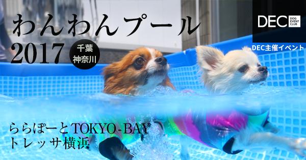 わんわんプール 2016|DOG SPORTS