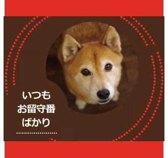 DOG TOUR