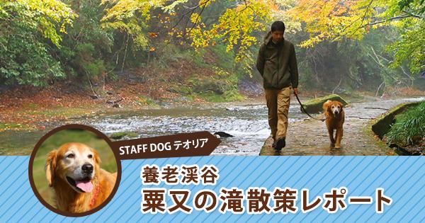 おでか犬体験レポート第3弾!養老渓谷「粟又の滝(あわまたのたき)」散策 with テオリア