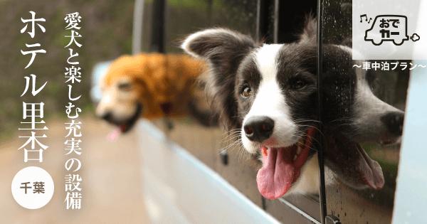 愛犬と楽しむ充実の設備|ホテル里杏