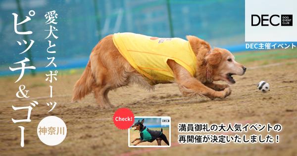 運動不足解消プロジェクト ピッチ&ゴー |DOG SPORTS