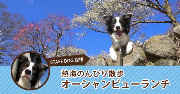 おでか犬体験レポート第5弾!熱海梅園から海まで下っていくお散歩コース with 総悟