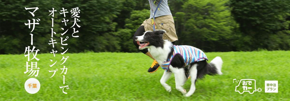 マザー牧場|愛犬とキャンピングカーでオートキャンプ|おでカーでおでか犬