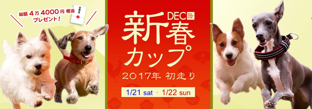 DEC新春カップ DEC主催イベントのご紹介