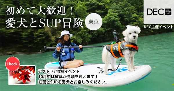 初めて大歓迎!愛犬とSUP冒険 |DOG SPORTS
