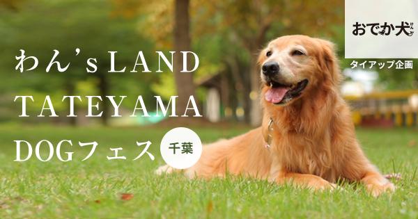 わん's LAND TATEYAMA DOGフェス
