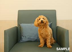 客室でのスタジオ愛犬撮影会