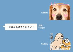 愛犬オリジナルLINEのスタンプ撮影会
